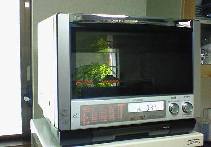 200811291159000.jpg